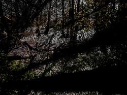 Ombres en forêt