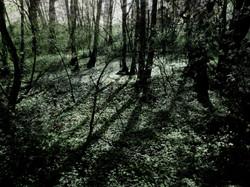 Les ombres des arbres