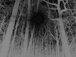 Soleil noir en forêt
