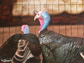 Talkin' Turkeys