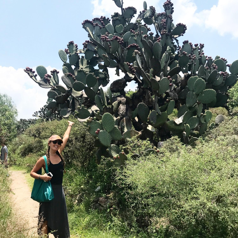 Cactus Botanical Garden