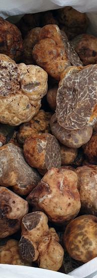 white-truffle-20190205_132457.jpg