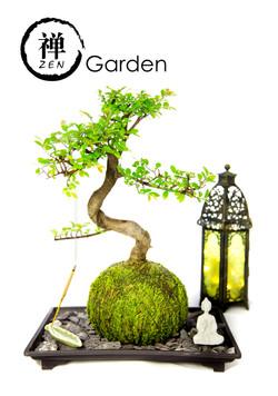 Tranquil plants  (40 of 85)zen garden
