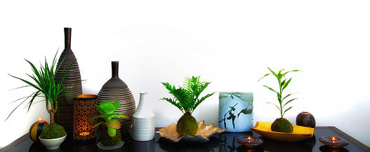 website designer in Leicester, website content creation for Tranquil Plants  in Leicester