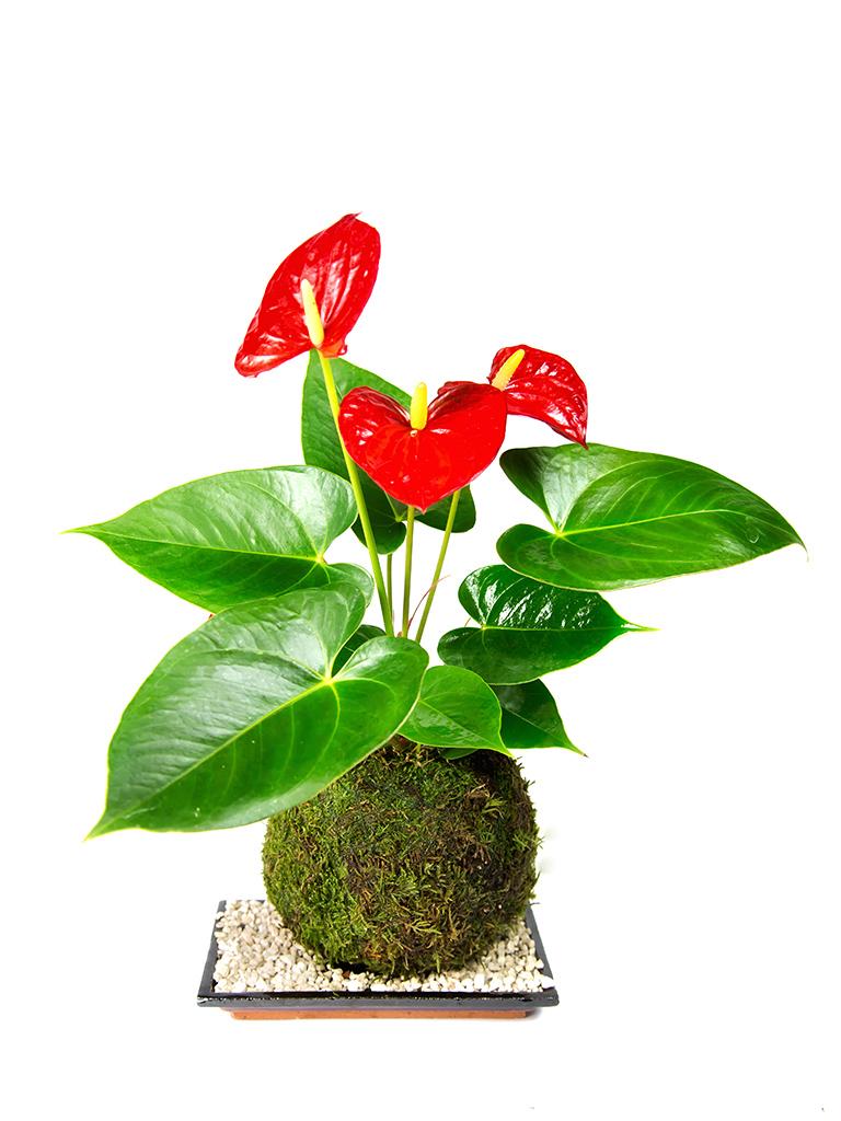 Tranguil Plants bonsai (18 of 136)