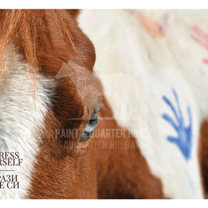 Eternal Values Brought by American Horses - Photo Exhibition