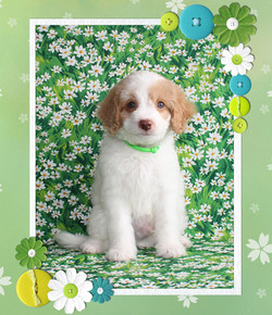 Winston ~ Green Collar BOY