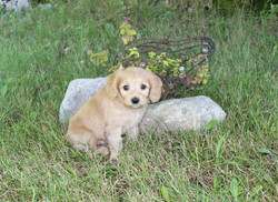 Marcus (Green Boy) -- 6 weeks old pic 1.