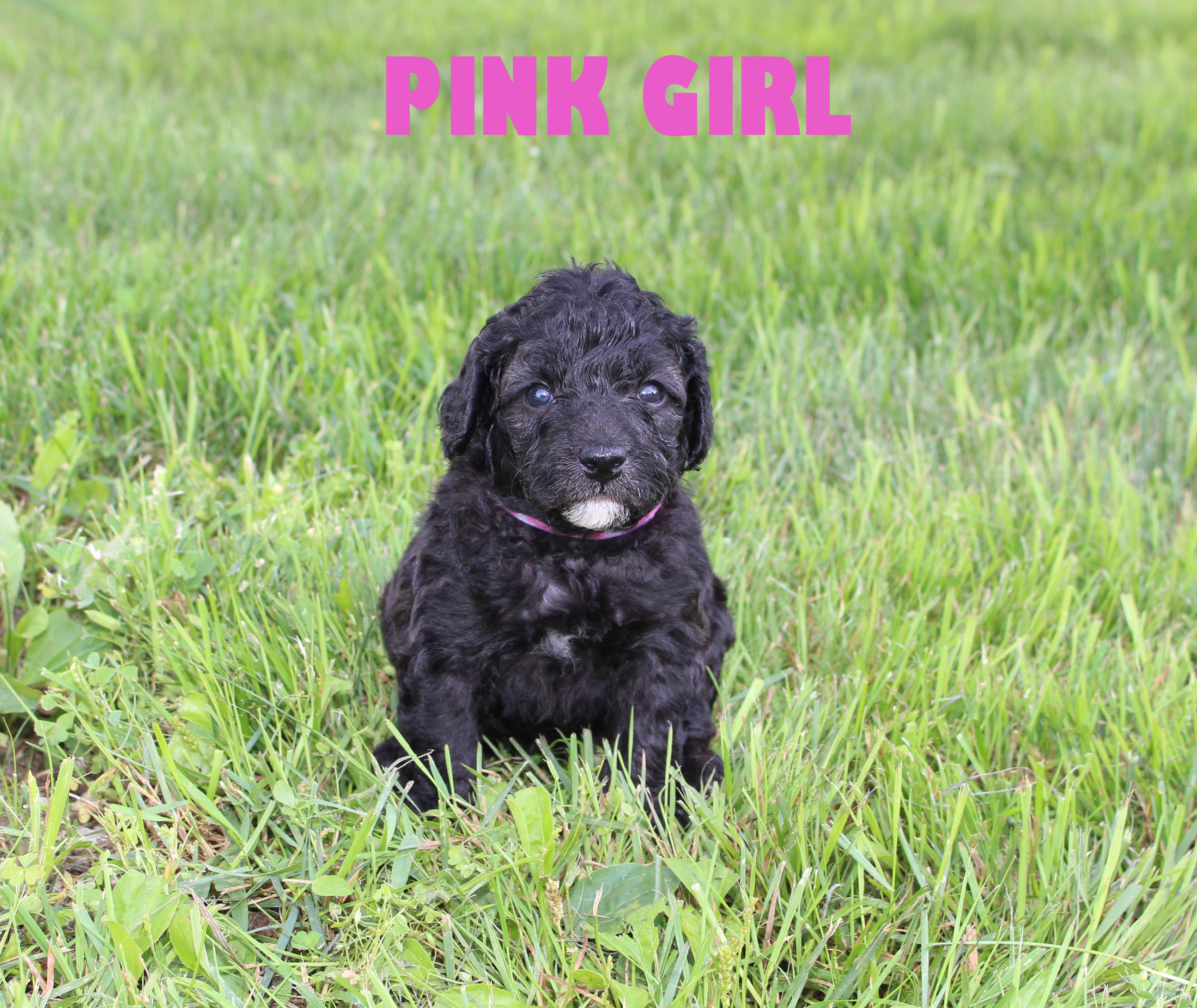 Pink GIRL -- 4 weeks old