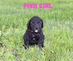 Pink GIRL -- 4 weeks old