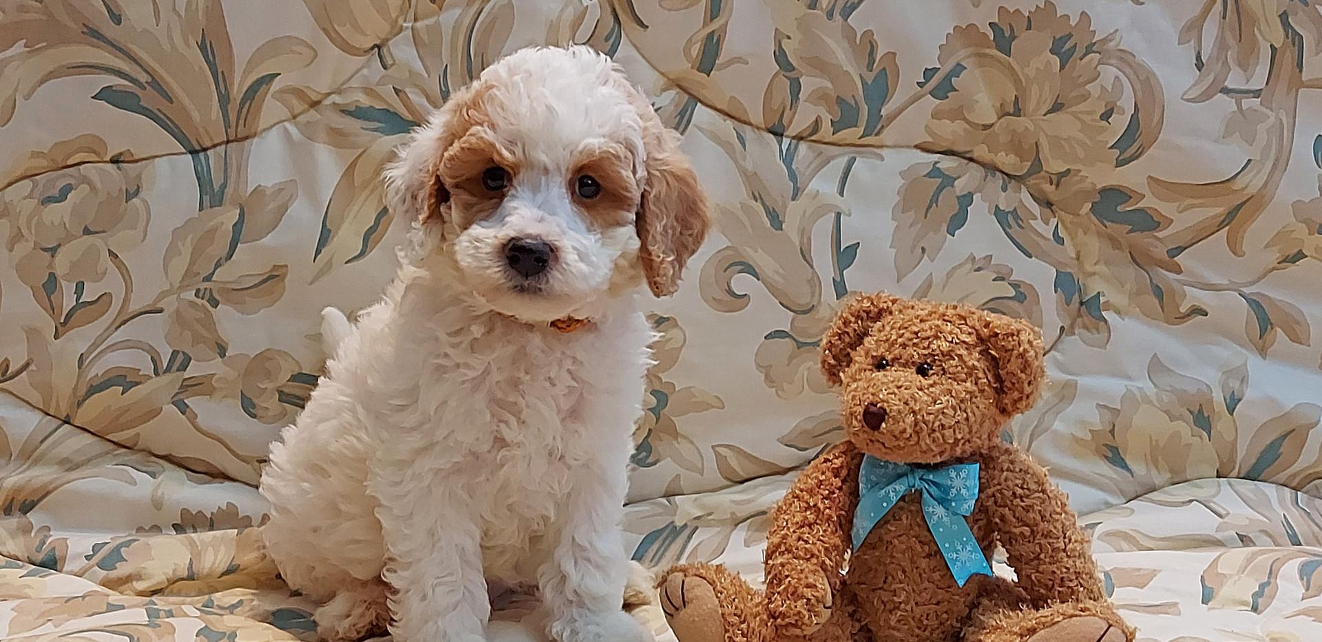 Benji -- 8 weeks old