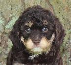 Dobby -- 6 weeks old pic 1.jpg