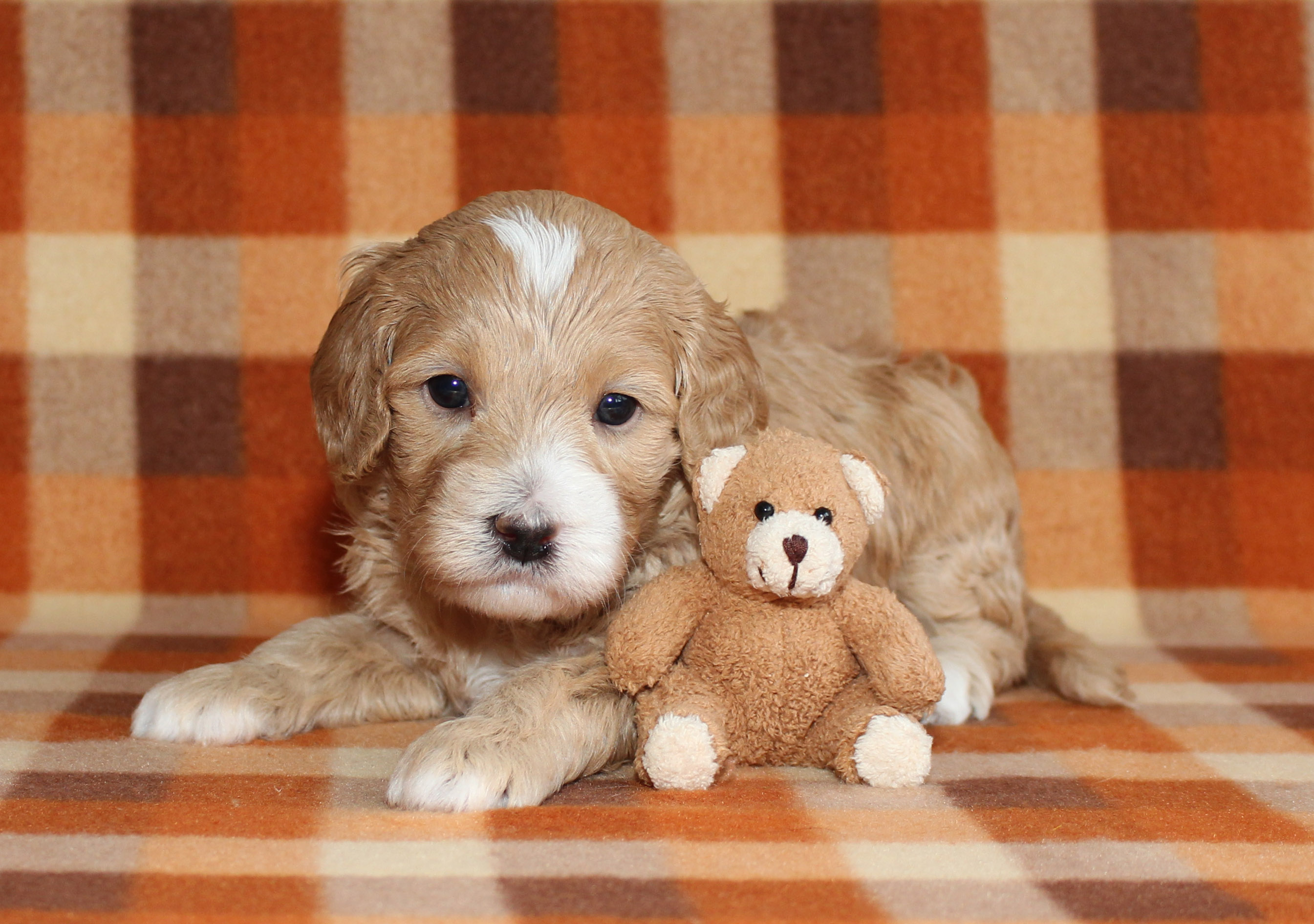 Puppy 5 -- BOY
