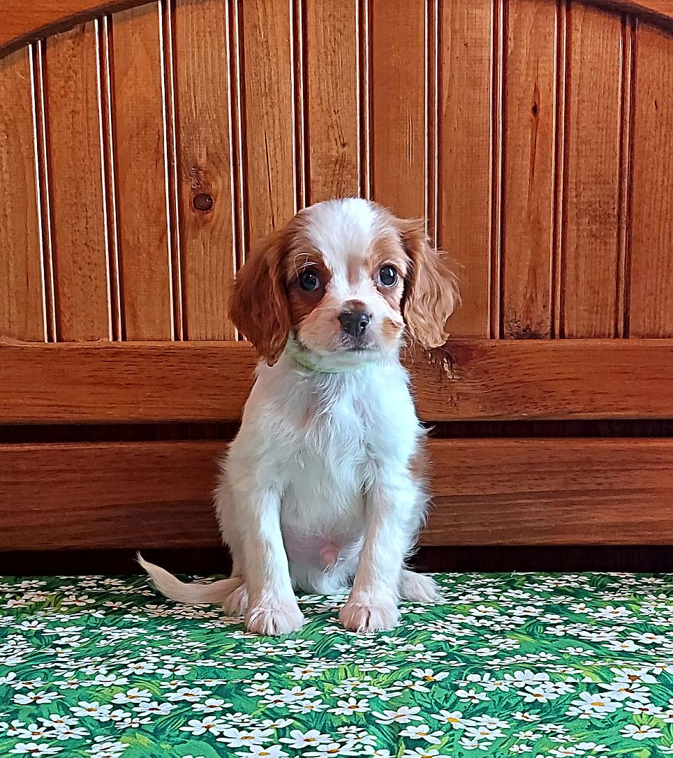 Koda -- 8 weeks old pic 1