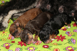Holly and Cabello's 2018 litter!