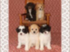 Annalyse X Samuel's 2019 puppies -- 8 we