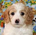 Casper -- 6 weeks old pic 4.jpg