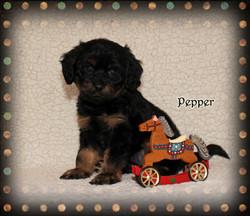 Pepper ON HOLD for Elaine C.