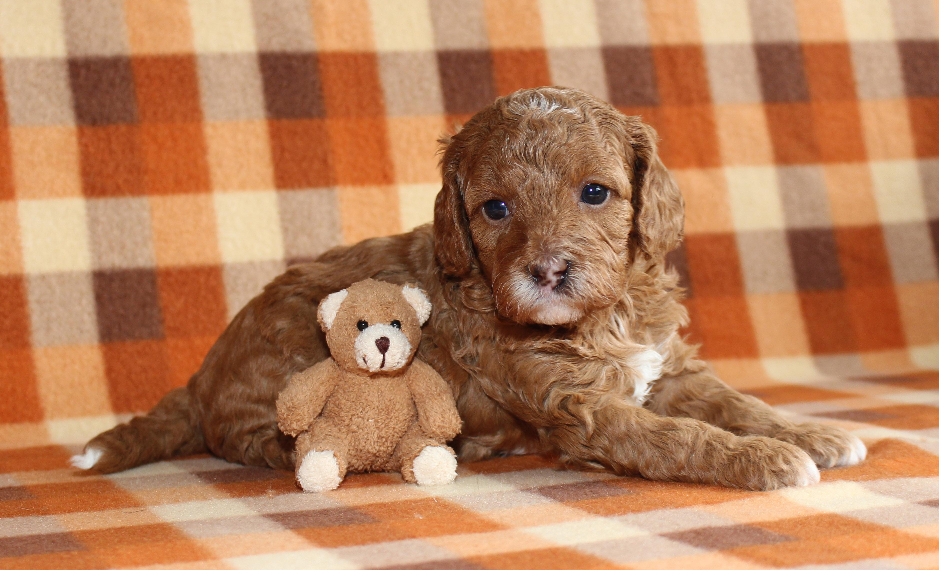Puppy 6 -- GIRL