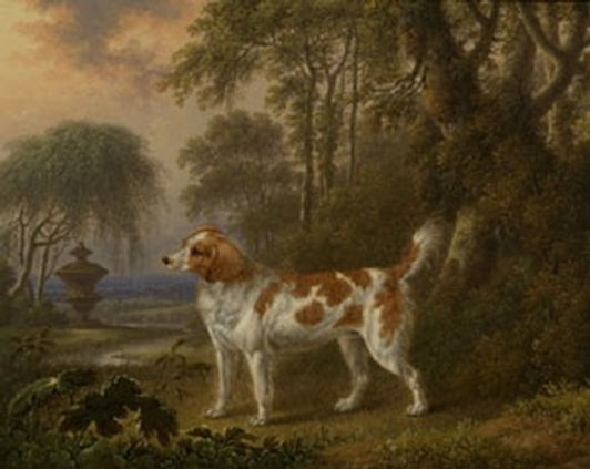 The Marlborough Spaniel by Charles Towne