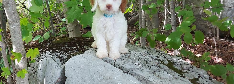 Zack -- 8 weeks old