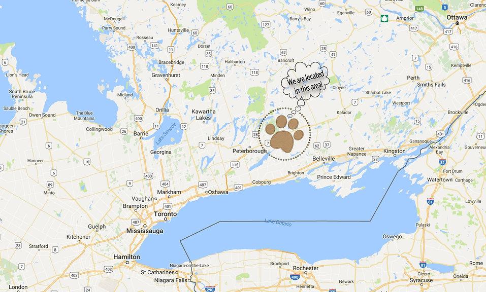 Cavapoos Ontario