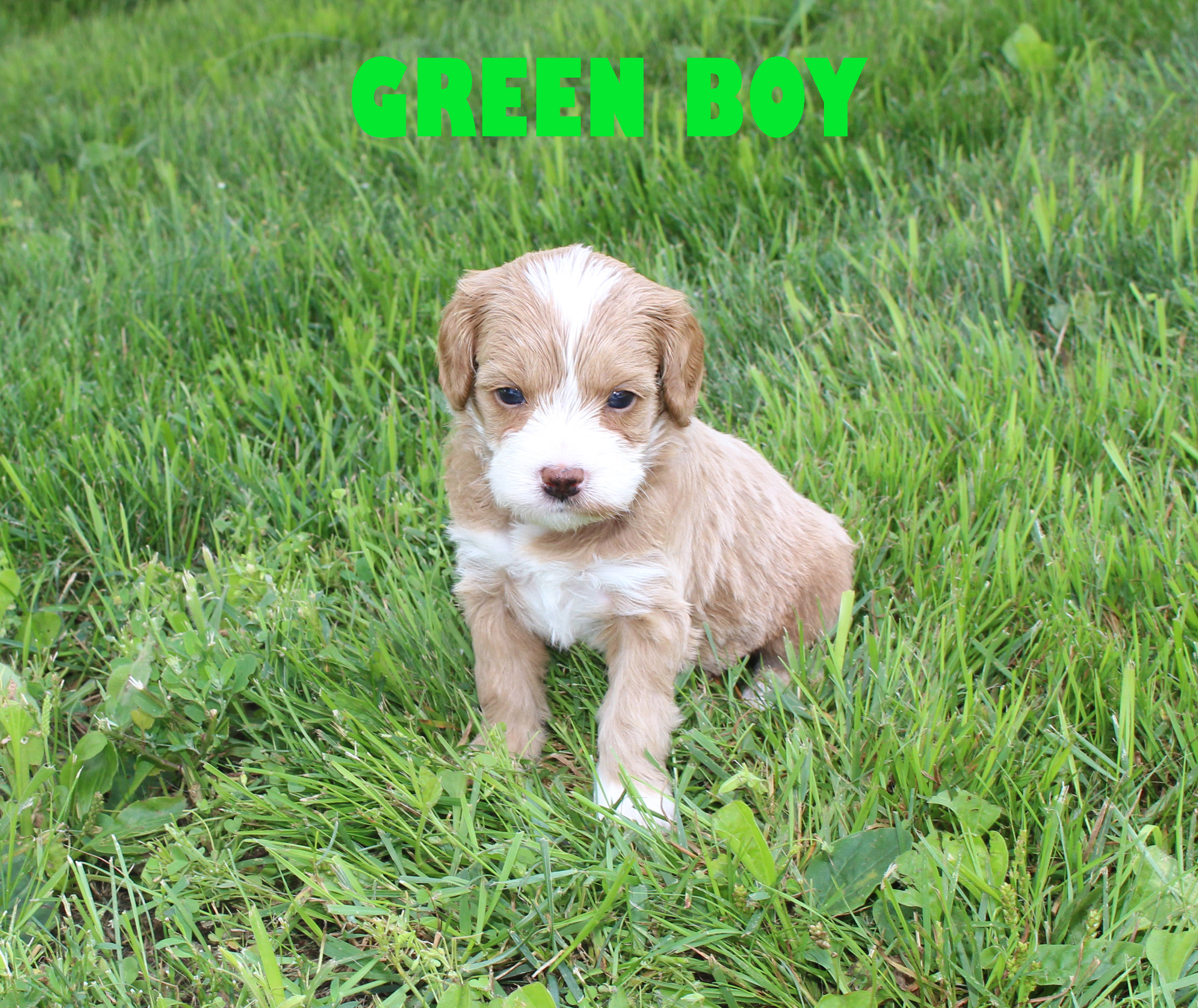 Green BOY -- 4 weeks old
