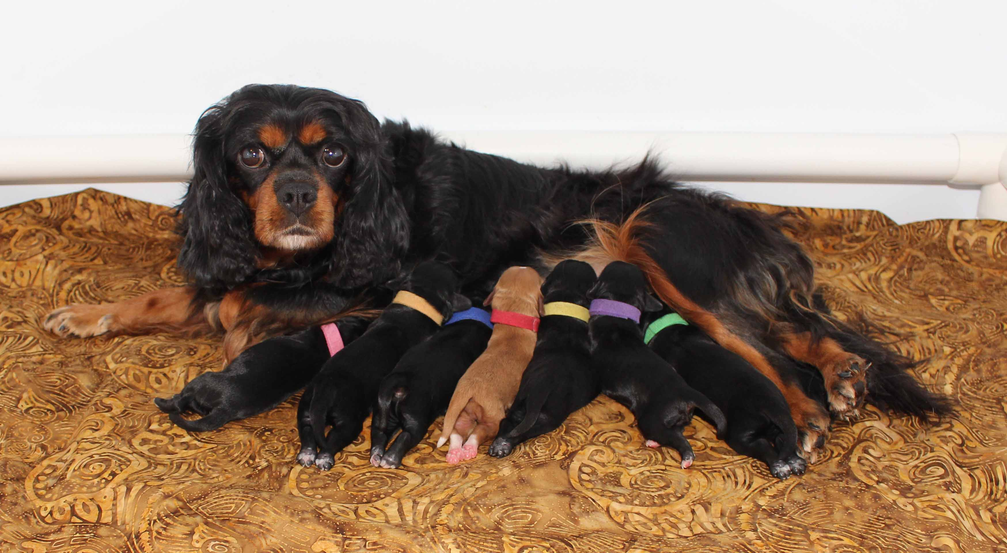 Gloria & Samuel's 2019 Litter