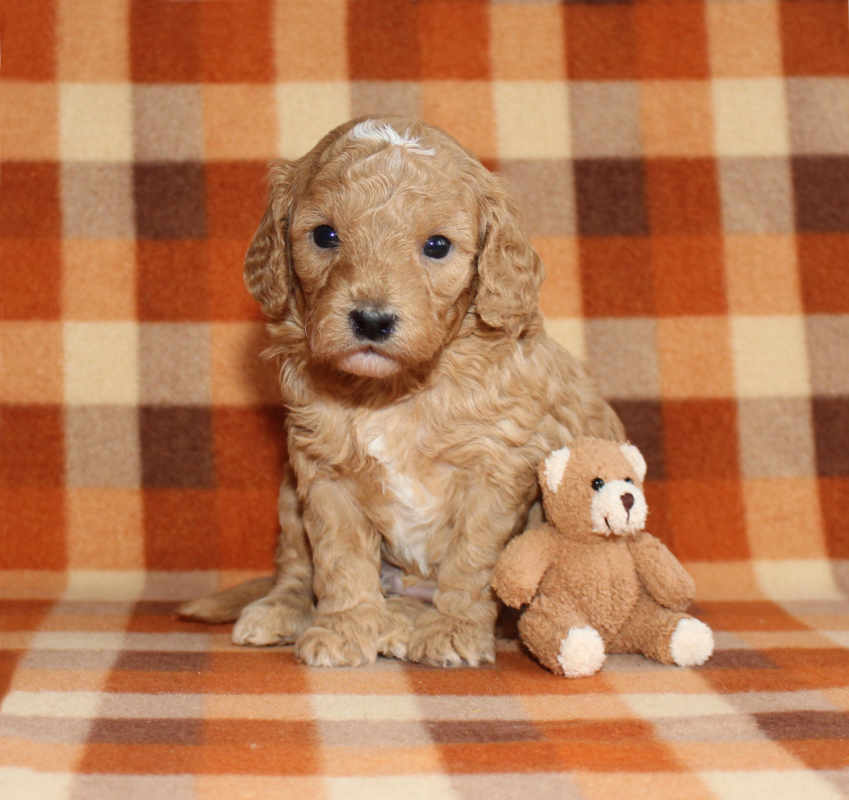 Puppy 3 -- BOY