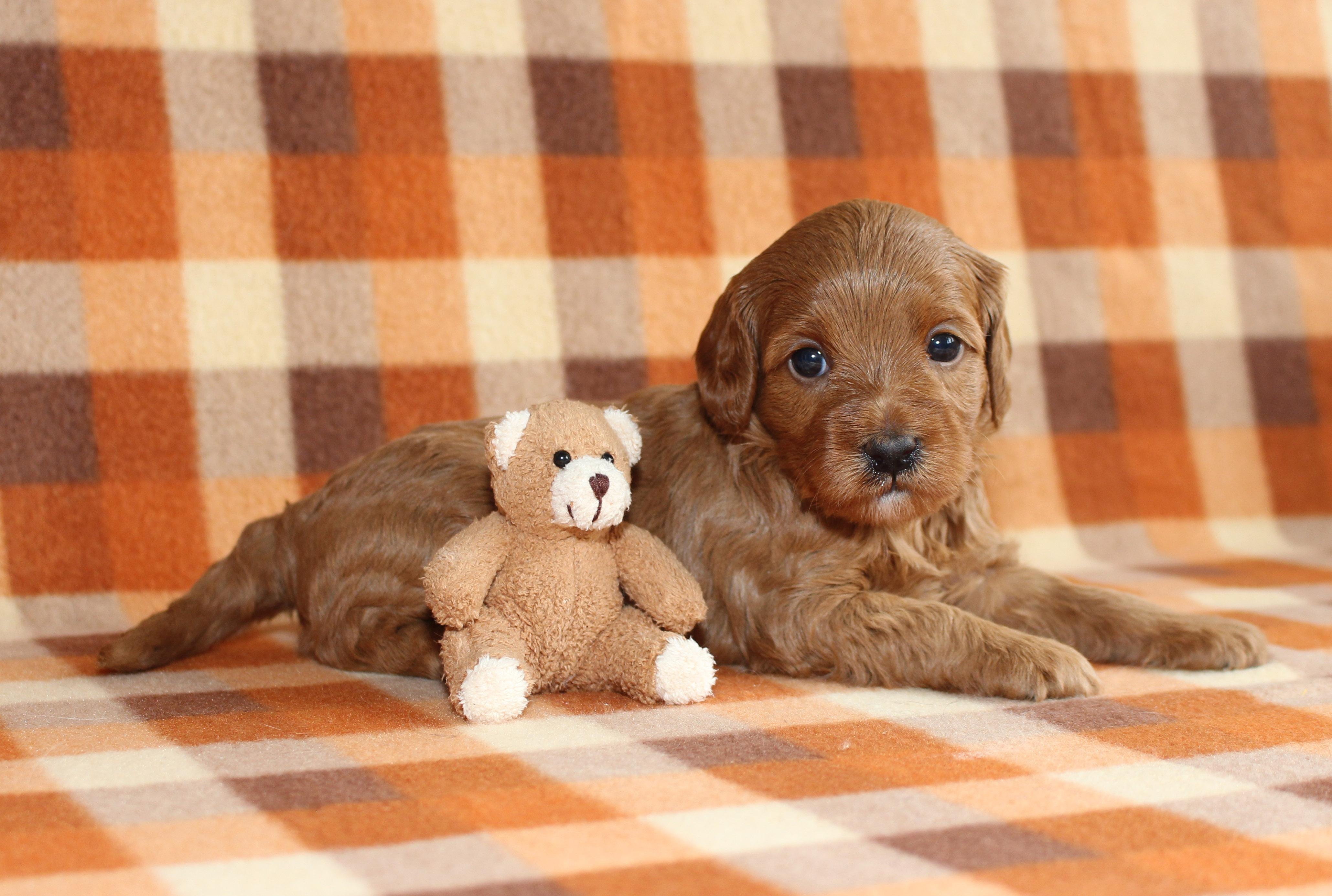 Puppy 1 -- GIRL