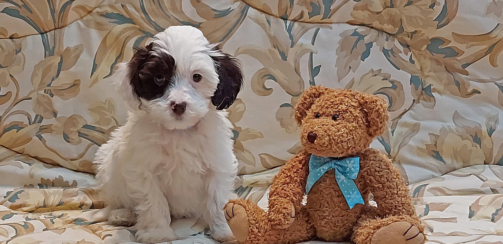 Reggie -- 8 weeks old