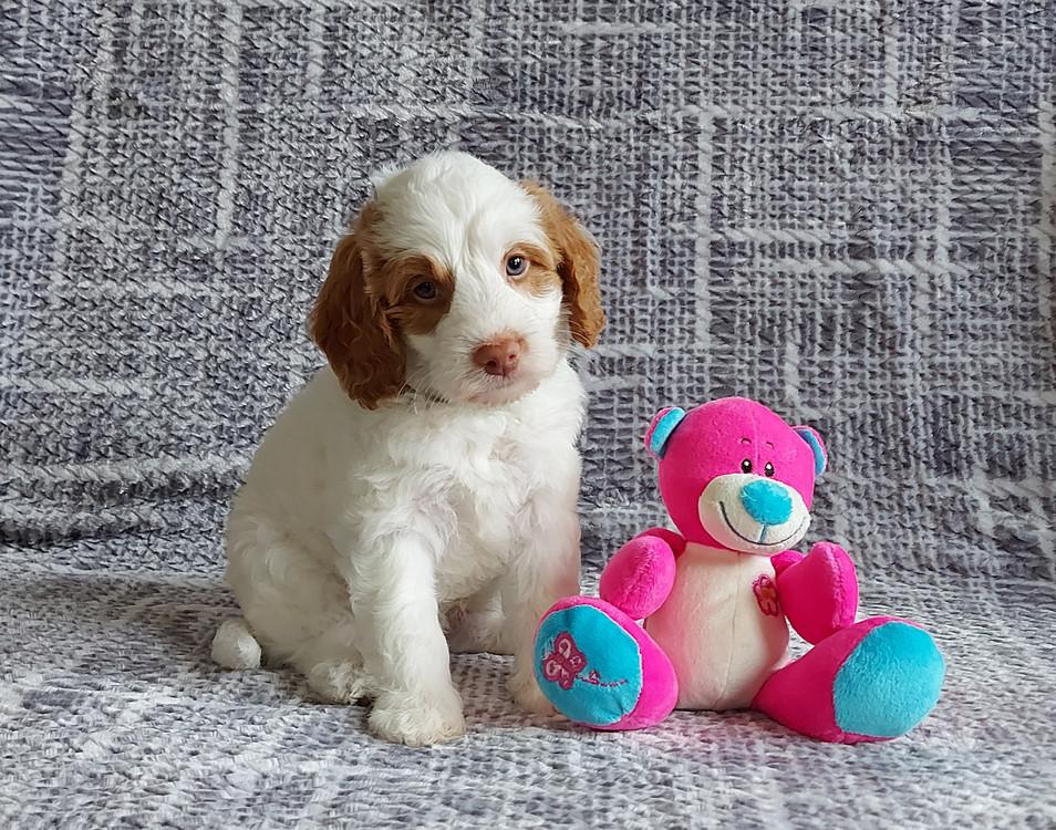Toby -- 6 weeks old