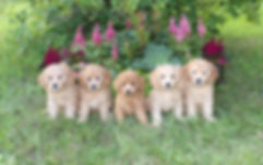 Daphne and Trenton's Puppies 8 weeks old