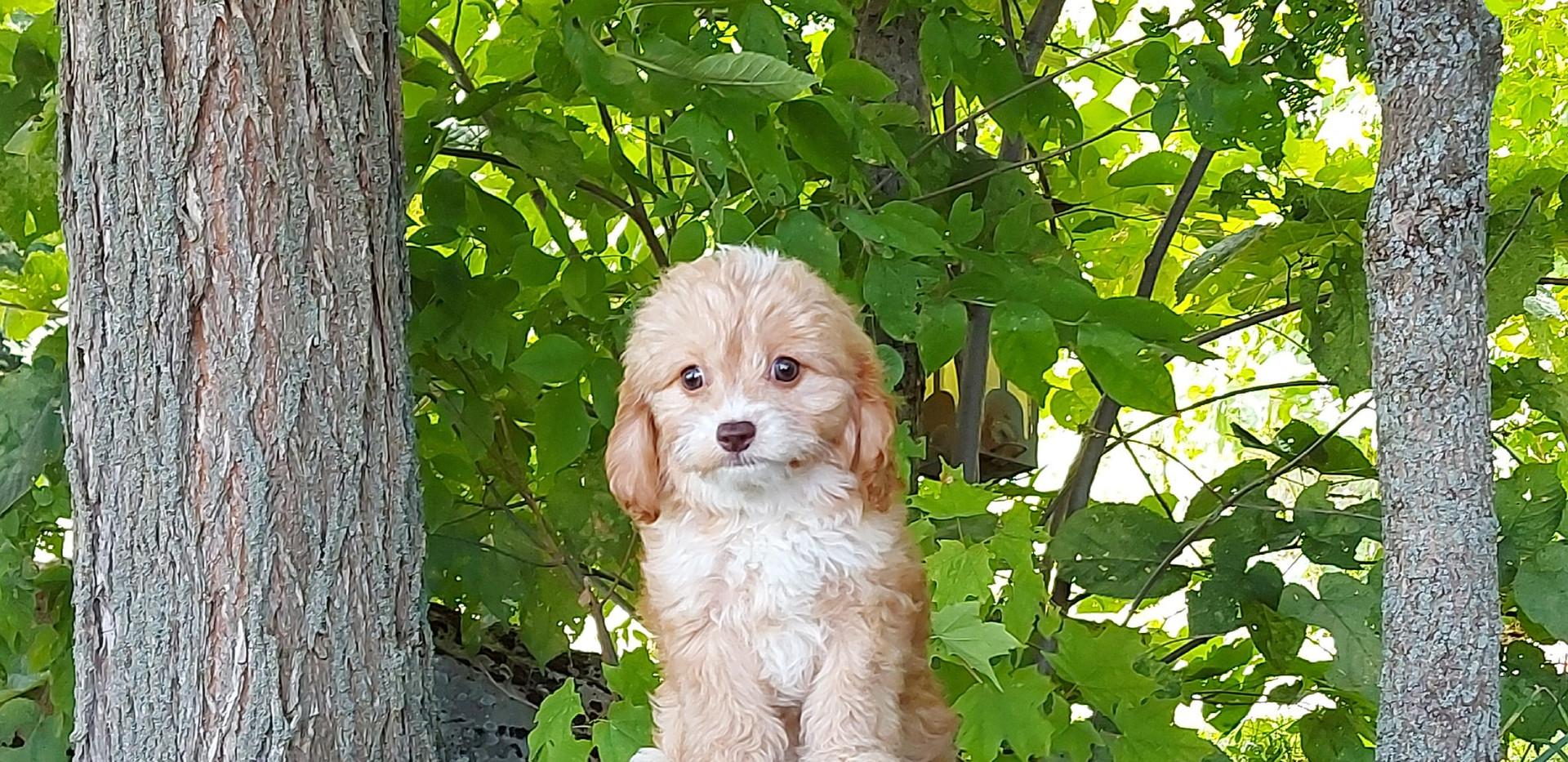 Bella -- 8 weeks old