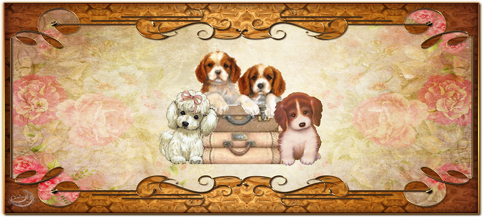 History of the Cavalier, Miniature Poodle, and Cavapoo