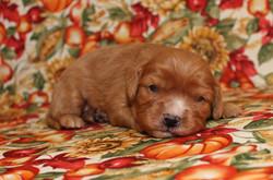 Desta -- 2 weeks old