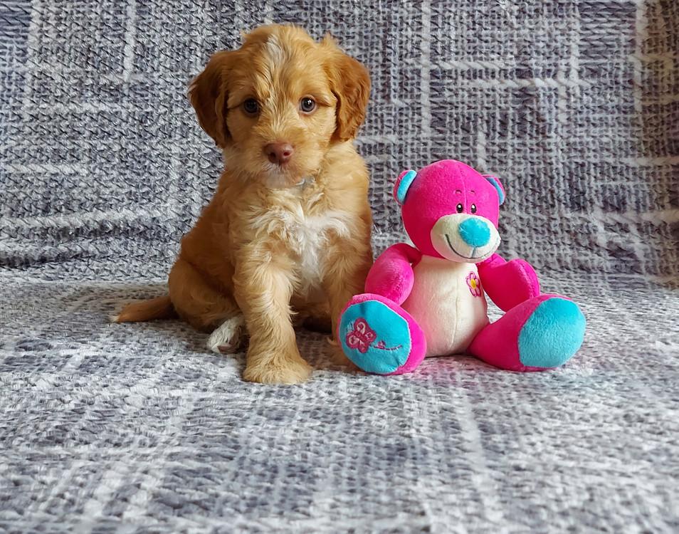 Archie -- 6 weeks old