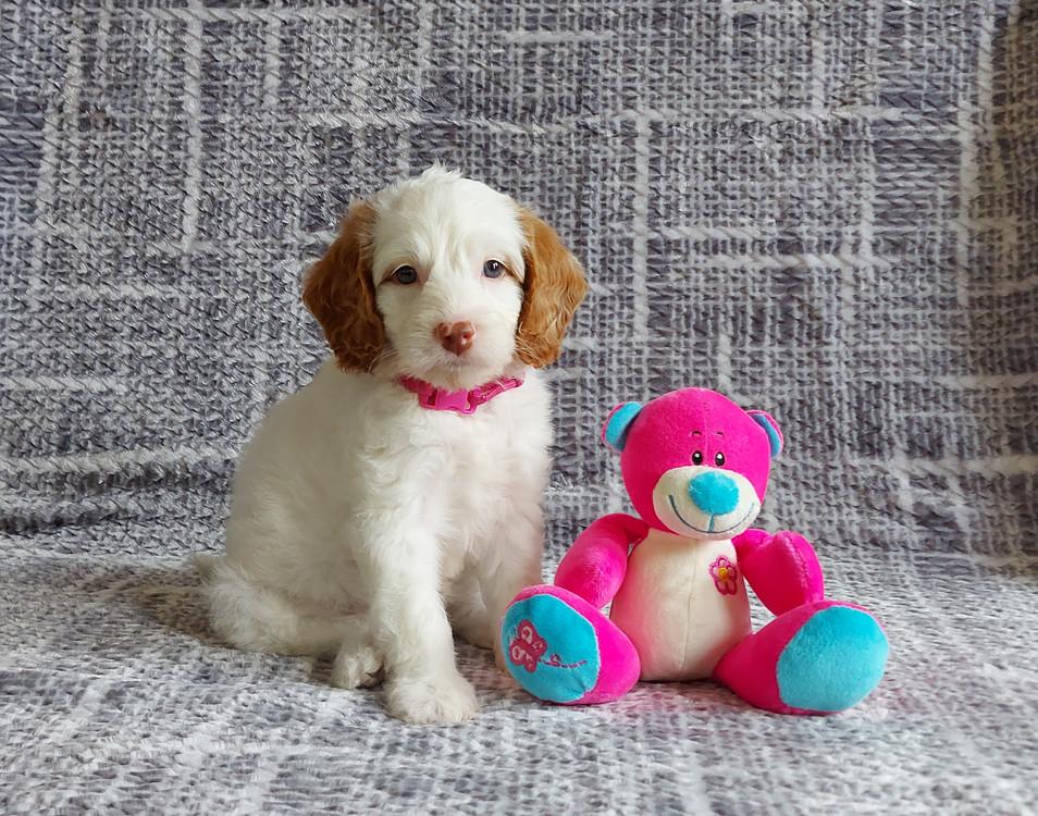 Olive -- 6 weeks old