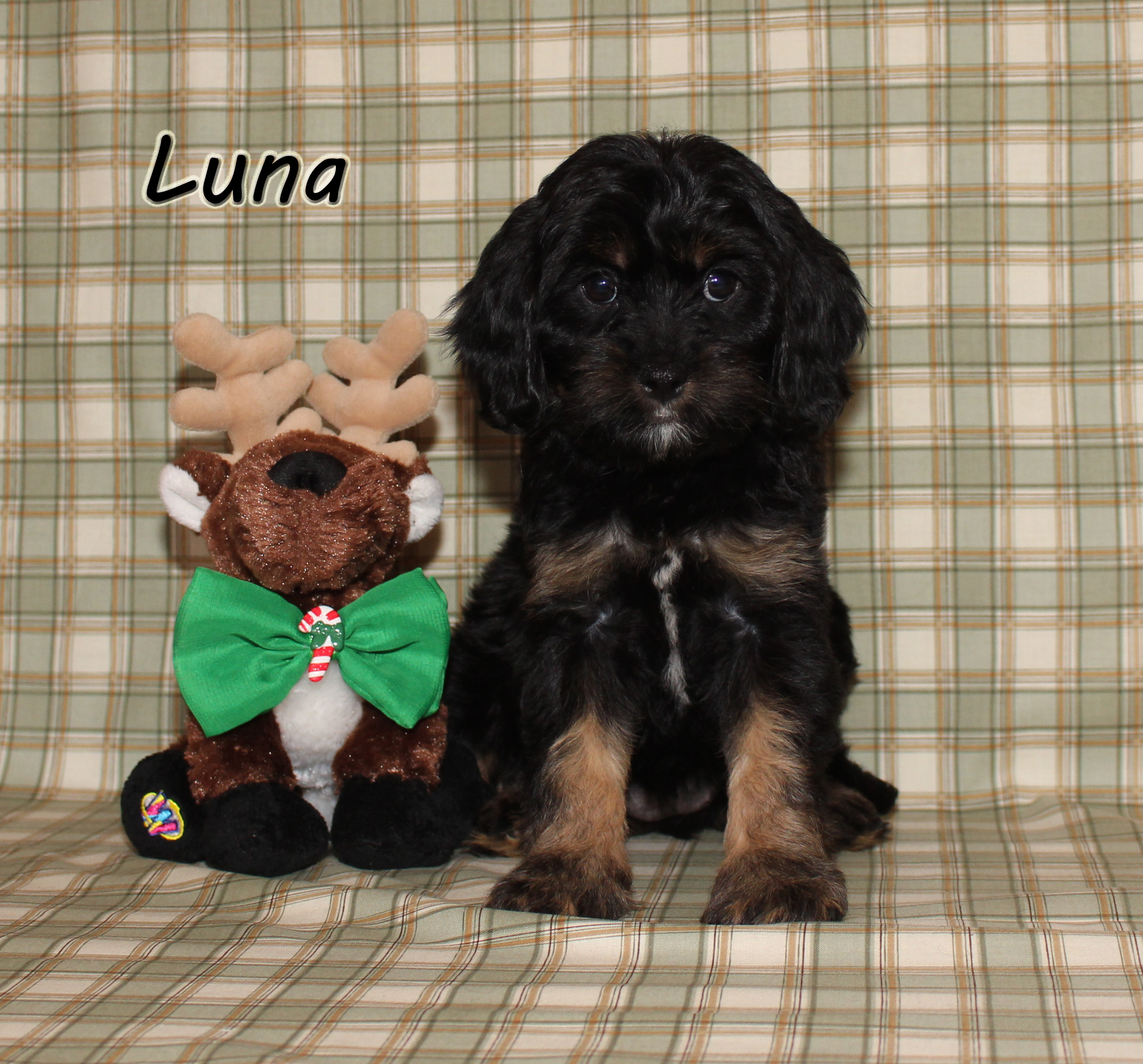 Luna ON HOLD for Nancy,Scott,Rebeca