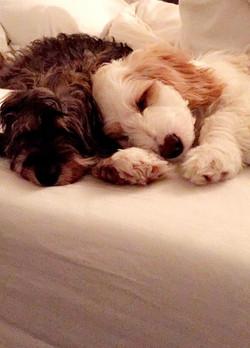 Mojo & Luca -- Nov. 2016