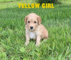Yellow GIRL -- 4 weeks old