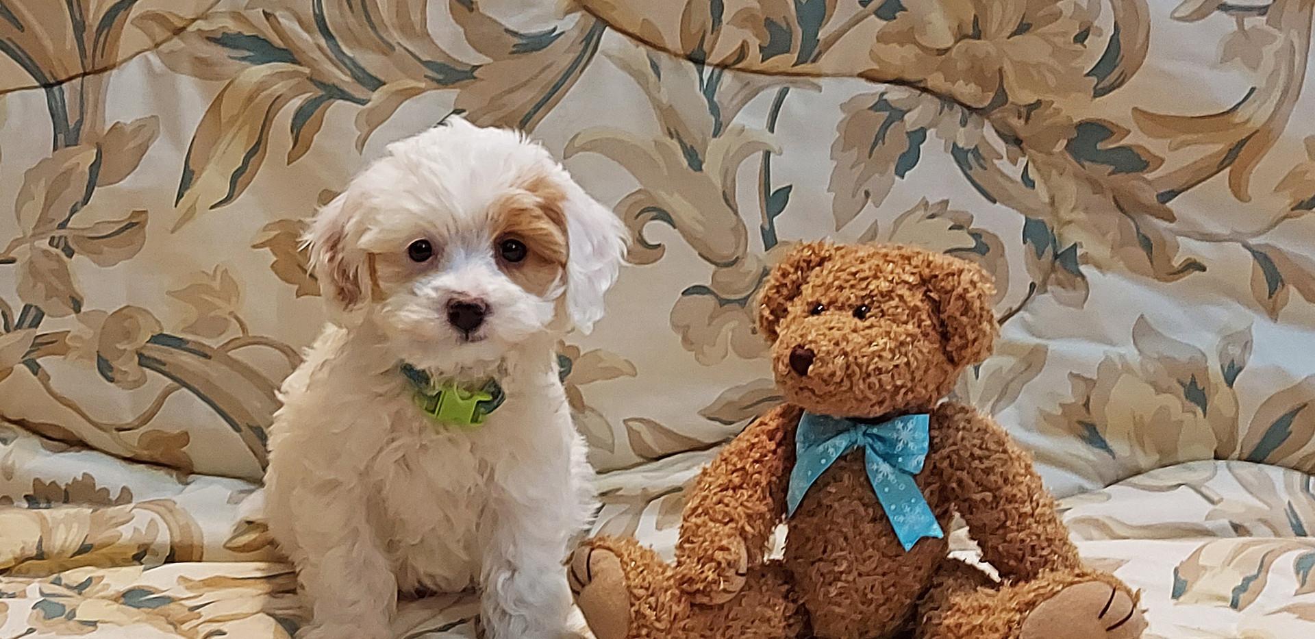 Oscar -- 8 weeks old