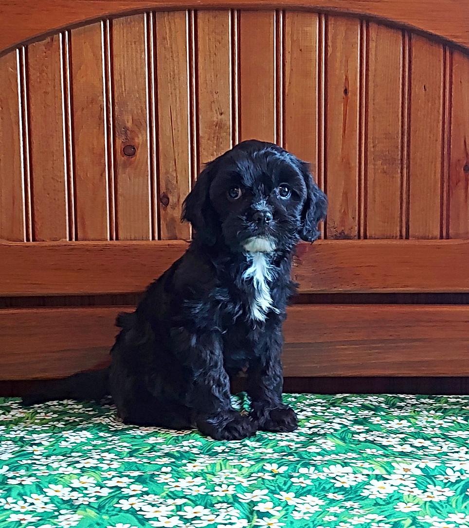Ella -- 8 weeks old pic 2
