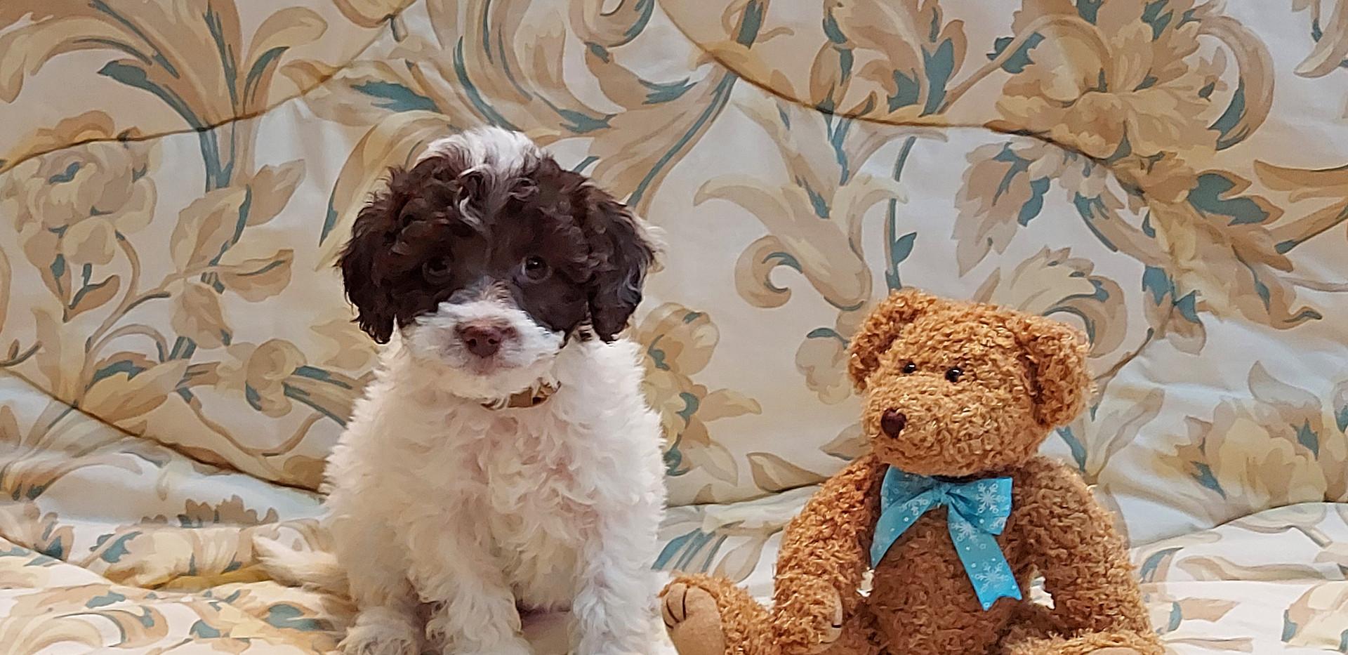 Romeo -- 8 weeks old