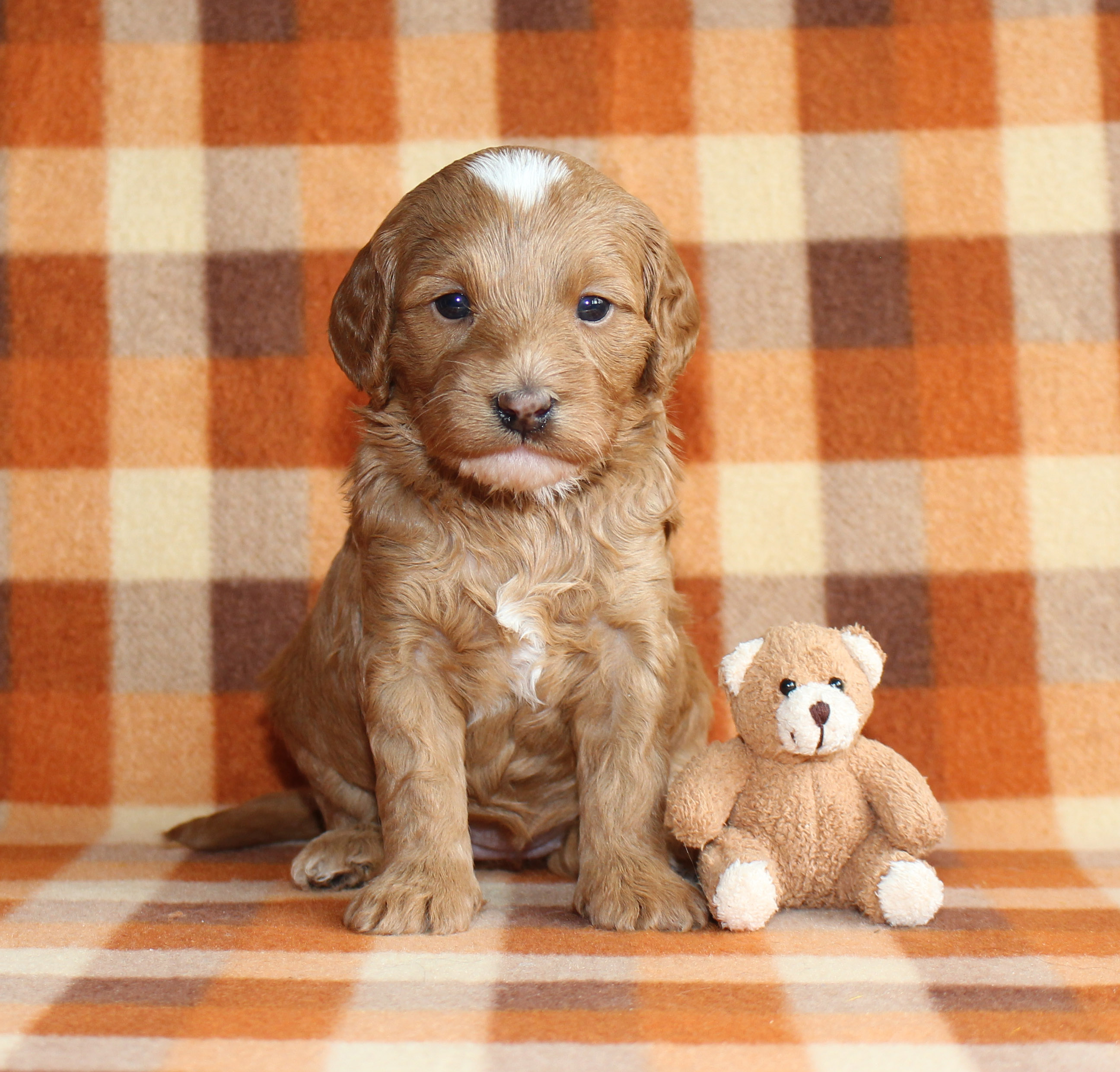 Puppy 2 -- GIRL