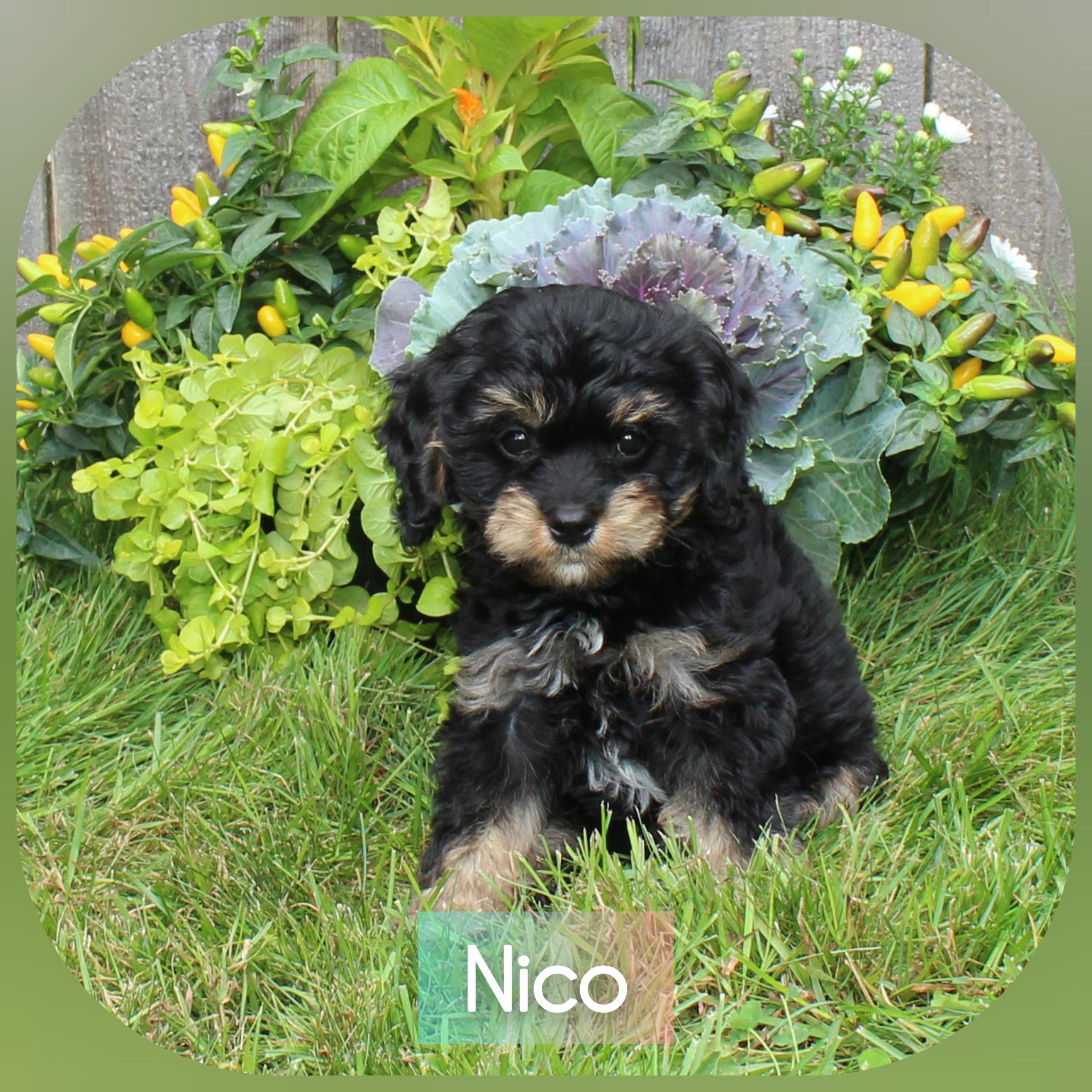 """Nico"" -- Blue Collar Mix"