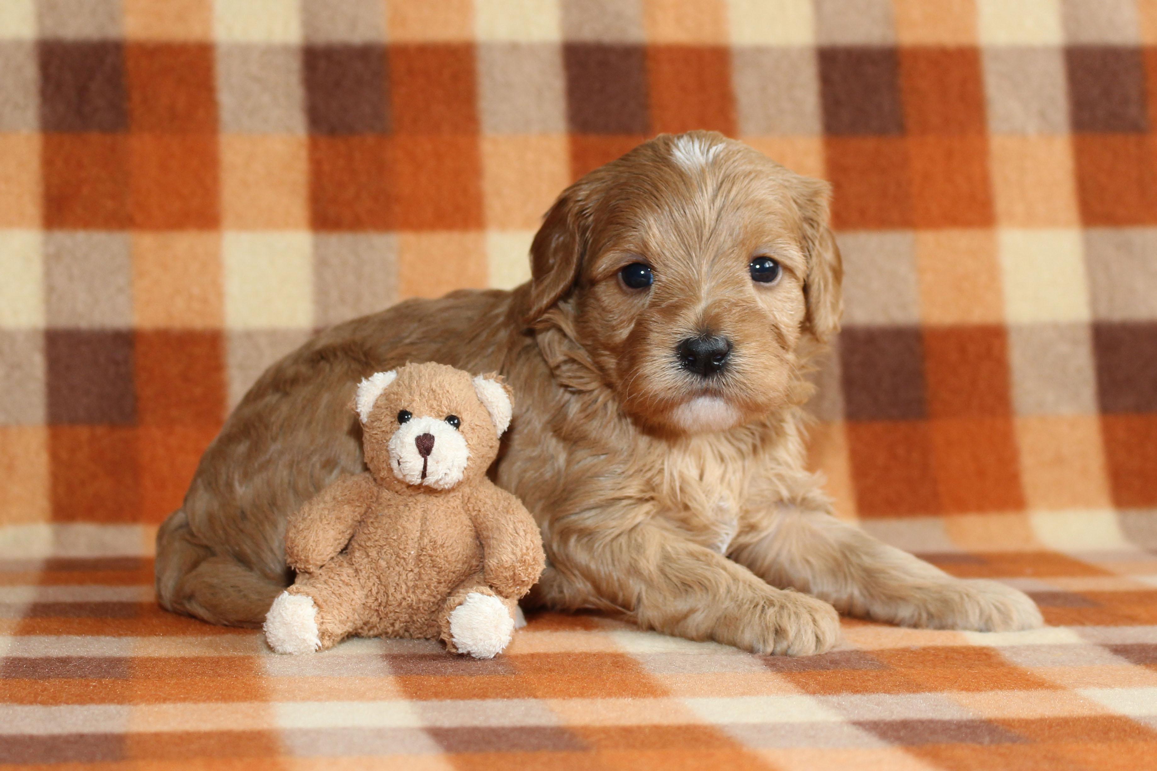 Puppy 4 -- GIRL