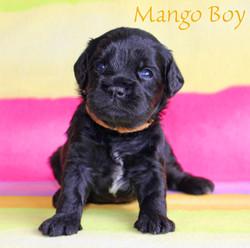Mango Boy