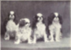 Toy_Spaniel_from_1915.jpg
