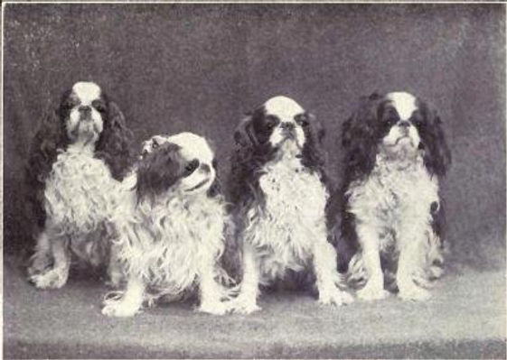 Toy_Spaniel_from_1915.jpg